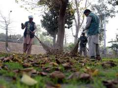 LAHORE: PHA workers busy in sweeping dry leaves of tree drops at roadside greenbelt during Autumn season in Provincial Capital.