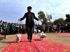 PESHAWAR: A participant with his dogs walking on ramp during the 2nd Grand Pet Show 2019 at Edwards College.