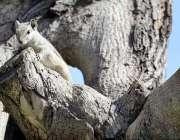 راولپنڈی: ایک مقامی گارڈن میں ایک گلہری درخت کے تنے پر بیٹھی ہے۔