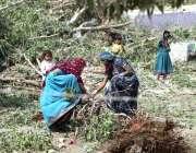 حیدرآباد: سینٹرل جیل کے قریب گھریلو خواتین گھریلو استعمال کے لئے درختوں ..