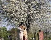 اسلام آباد: شہر میں موسم بہار کے موسم کے موقع پر پھولوں سے بھری درخت ..