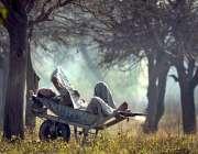 راولپنڈی: سڑک کے کنارے گرین بیلٹ میں اپنی ہاتھ گاڑی میں آرام کرتے ہوئے ..