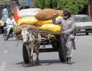 راولپنڈی:ایک معمر مزدور گدھا ریڑھے کے ذریعے سامان گودام منتقل کر رہا ..