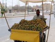 کراچی : پھلوں کے بادشاہ آم کا سیزن شروع ہونے پر ایک ریڑھی بان آم فروخت ..