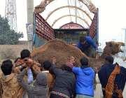 ملتان: لوگ جانوروں کی منڈی تک پہنچانے کے لئے ٹرک پر اونٹ لادتے ہوئے