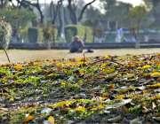 اسلام آباد: وفاقی دارالحکومت میں درختوں کے  پتوں اور بدلتے رنگوں کا ..