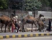 لاہور : خانہ بدوش خواتین اونٹنی کا دودھ فروخت کررہی ہیں۔