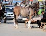 راولپنڈی: گھڑ سوار اپنے سدھارے ہوئے گھوڑے کے ہمراہ سڑک کنارے کام کے ..