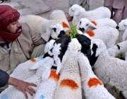 کوئٹہ: میزان چوک کے علاقے میں ایک شخص بھیڑ فروخت کررہا ہے