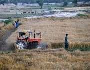 ملتان: مہر گاؤں میں اپنے کھیتوں میں گندم کی فصل کاشت کرنے والا ایک کسان۔