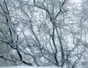 مری: شہر میں شدید برف باری کے بعد برف سے ڈھکے ہوئے درختوں کا ایک خوبصورت ..