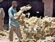 ملتان: مزدور سوکھنے کے لئے ایک گودام کے صحن میں اون پھیلاتے ہیں۔