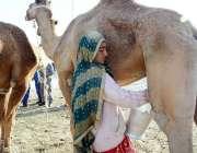 کراچی: ایک خانہ بدوش لڑکی سڑک کنارے اونٹنی کا دودھ بیچ رہی ہے۔