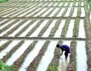 حیدرآباد، بائی پاس کے قریب ایک کسان کھیتی باڑی میں مصروف ہے۔