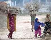 راولپنڈی: خانہ بسوش خواتین خشک لکڑیاں اکھٹی کر کے لے جا رہی ہیں جو گھرمیں ..