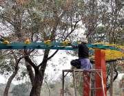 اسلام آباد: جی۔ 7 ایریا میں گرین بیلٹ میں شیڈ پینٹ کرنے والا پینٹر۔