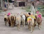 لاہور: ایک محنت کش چھترے فروخت کرنے کیلئے لے جارہا ہے