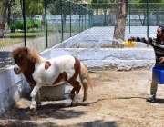 حیدرآباد: چڑیا گھر کا عملہ شہر میں گرم دن میں جانورں کو نہلانے میں مصروف ..
