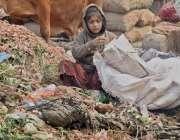 لاہور: ایک خانہ بدوش بچی منڈی میں کچرے کے ڈھیر سے سبزیاں اکٹھی کررہی ..