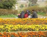 لاہور : جیلانی پارک کی سیر کیلئے آنے والی فیملی دو پہر کا کھانا کھا رہی ..