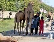 لاہور: خاتون مغلپورہ چوک کے قریب اونٹنی کا دودھ نکال رہی ہے