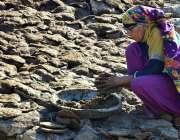 حیدرآباد:ایک کسان خاتون بطورایندھن کھانا پکانے کے لئے گوبردھوپ میں ..