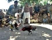 ملتان: پیر مبارک شاہ کے قریب مرغیوں کی غیر قانونی لڑائی  کروائی جا رہی ..