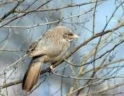 ملتان: ایک درخت کی شاخ پر بیٹھا ہوا پرندہ