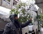 کوئٹہ: ایک شخص درخت پر جمے ہوئے پانی کو دیکھ رہا ہے۔