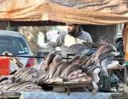 اسلام آباد: ایک دکاندار صارفین کو راغب کرنے کے لئے مچھلیاں دکھا رہا ..