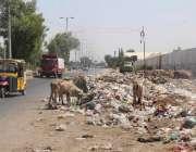 کراچی: ماڈل کالونی کی مین شاہرہ پر کچرے کے ڈھیر لگے ہوئے ہیں جو کہ بلدتی ..