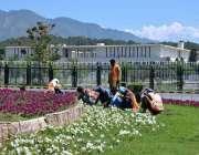 اسلام آباد: سی ڈی اے کارکن ڈی چوک پر پھولوں کے پودے لگانے میں مصروف ہیں