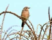 ملتان: ایک خوبصورت پرندہ جو پودے پر بیٹھا ہے۔