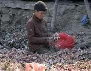 اسلام آباد: خانہ بدوش بچہ سبزی منڈی میں کچرے سے  پیازتلاش کر رہا ہے