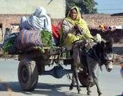 فیصل آباد: خانہ بدوش عورتیں جانوروں کے لئے سبز چارہ کاٹنے کے بعد گدھا ..