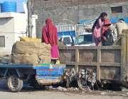 ملتان: خانہ بدوش کچرے سے قیمتی سامان تلاش کر رہے ہیں۔