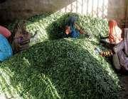 حیدرآباد: سبزی منڈی میں خواتین بھنڈیاں ٹوکری میں ڈال رہی ہیں۔