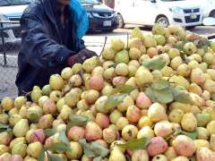 MULTAN:A vendor arranging and displaying guavas at his roadside setup.