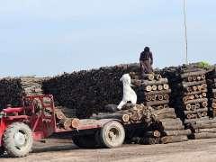 MULTAN:Labourer loading wood pieces on tractor trolley at Qasba Maral.