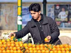 ISLAMABAD:A vendor displaying and arranging oranges to attract the customers at his roadside setup.
