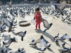 KARACHI:A baby girl feeding pigeons at Kabootar Chowk near Sindh Assembly.