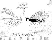 کراچی میں مکھیوں اور مچھروں کی یلغار۔ خبر