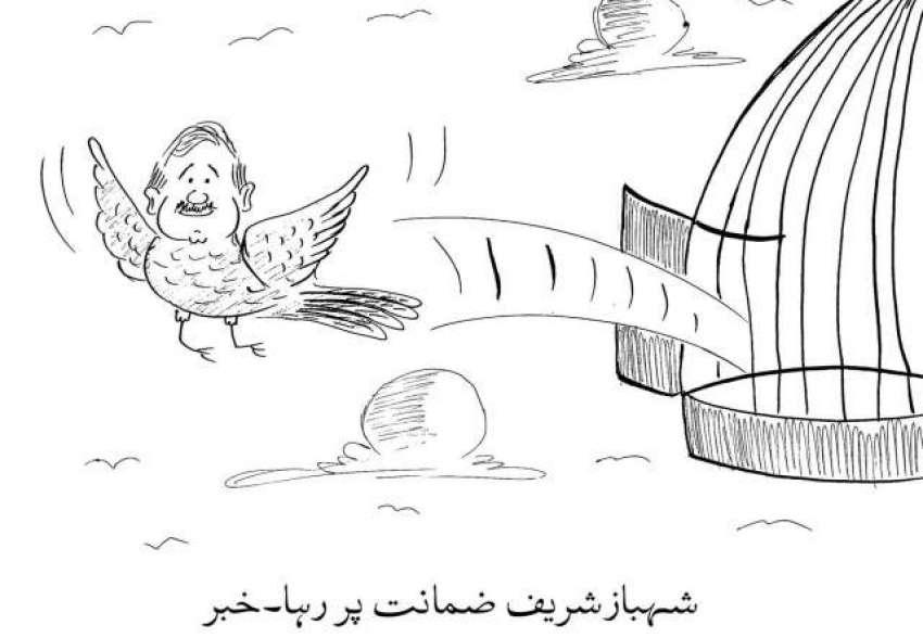 شہباز شریف ضمانت پر رہا۔ خبر