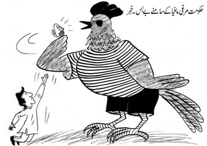 حکومت مرغی مافیا کے سامنے بے بس۔ خبر