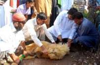 پاکستان عید قربان میں سب سے زیادہ جانور ذبح کرنے والے اسلامی ممالک ..