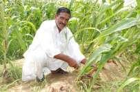 کسانوں کے بجلی کے کنکشن نہیں کاٹے جائیں گے،ڈاکٹر فرخ جاوید ،محکمہ زراعت ..