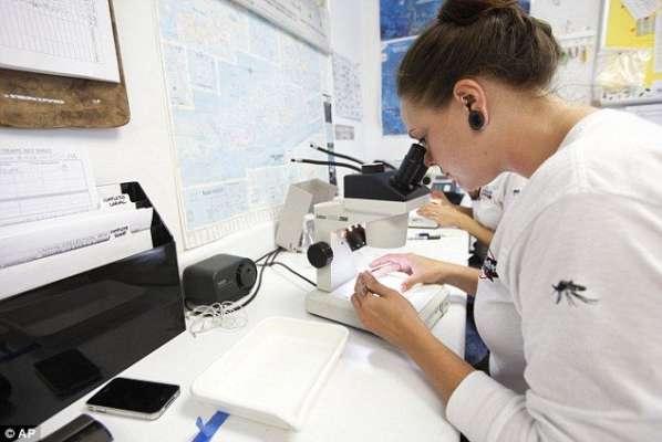 برازیل میں اچھے مچھروں کے ذریعے ڈینگی بخار پر کنٹرول کا تجربہ