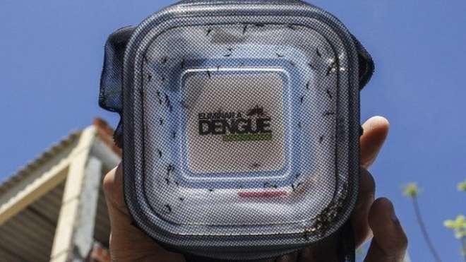 برازیل میں ڈینگی کے خاتمے کیلئے مچھروں کی فوج میدان میں آگئی ،بیکٹریا ..