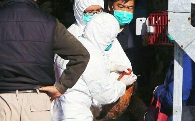 ہانگ کانگ  پرندوں میں برڈ فلو کے وائرس کی تصدیق کے بعد حکام نے پندرہ ..