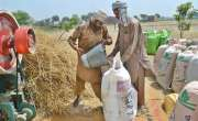 پنجاب حکو مت نے گندم خریداری میں اربوں روپے کی کرپشن کرنے کیلئے تکنیکی ..